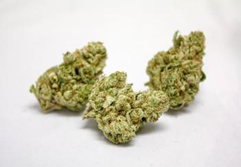 Face Off OG Weed Strain UK