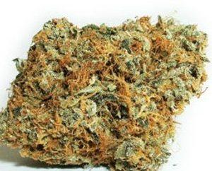 Van Nuys OG Weed Strain UK